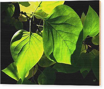 In The Limelight Wood Print by Will Borden