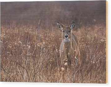 Wood Print featuring the photograph In The Meadow by Robin-Lee Vieira
