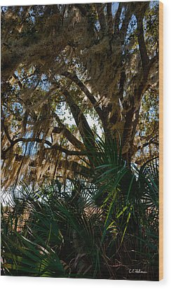 In The Shade Of A Florida Oak Wood Print by Christopher Holmes