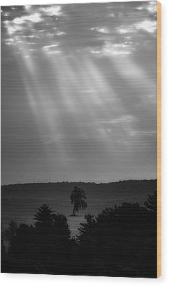 Wood Print featuring the photograph In The Spotlight by Bill Wakeley