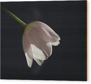 Wood Print featuring the photograph In The Spotlight by Kim Hojnacki