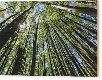 In The Swamp Wood Print