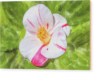 Wood Print featuring the mixed media In The Winter Garden - Camellia Blossom by Mark Tisdale