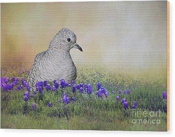 Inca Dove  Wood Print by Bonnie Barry