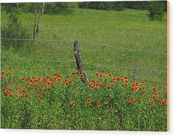 Indian Blanket Fence Wood Print