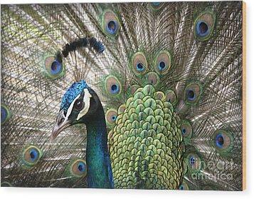 Indian Blue Peacock Puohokamoa Wood Print by Sharon Mau
