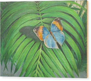 Indian Head Butterfly Wood Print by Oz Freedgood