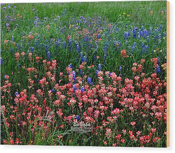 Wood Print featuring the photograph Indian Paintbrush #0486 by Barbara Tristan