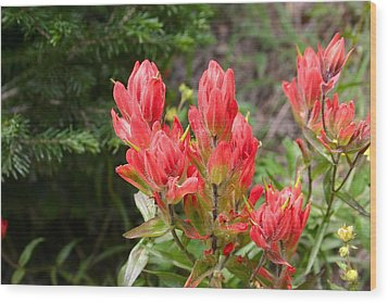 Wood Print featuring the photograph Indian Paintbrush by Perspective Imagery