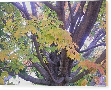Indian Tree Wood Print by Kristine Nora