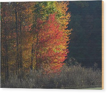 Indiana Colors Wood Print by Michael L Kimble