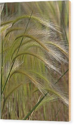 Indiangrass Swaying Softly With The Wind Wood Print by Christine Till