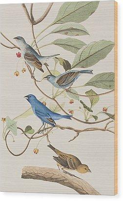 Indigo Bird Wood Print by John James Audubon