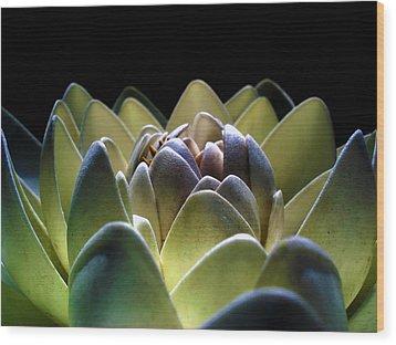 Indonesian White Lotus Wood Print by Sumit Mehndiratta