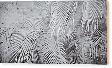 Infrared Palm Abstract Wood Print by Adam Romanowicz