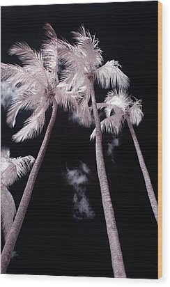 Infrared Palm Trees Wood Print by Adam Romanowicz