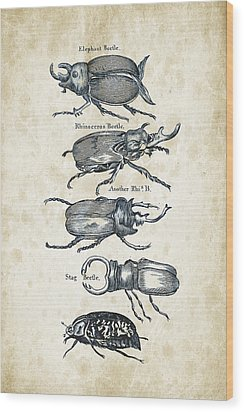 Insects - 1792 - 01 Wood Print by Aged Pixel