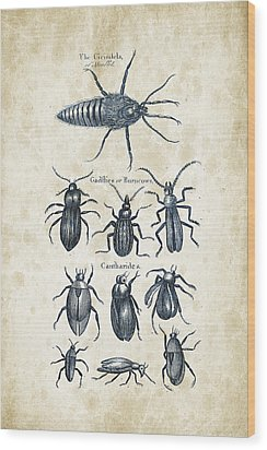 Insects - 1792 - 04 Wood Print by Aged Pixel