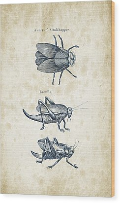 Insects - 1792 - 08 Wood Print by Aged Pixel
