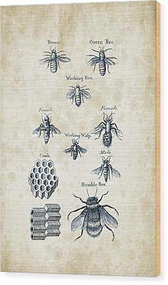Insects - 1792 - 14 Wood Print by Aged Pixel