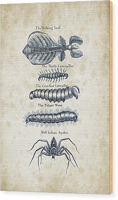 Insects - 1792 - 17 Wood Print by Aged Pixel