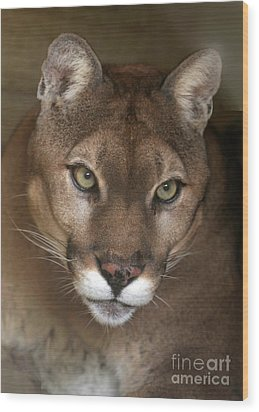 Intense Cougar Wood Print by Sabrina L Ryan