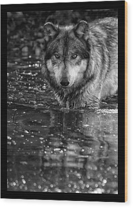 Wood Print featuring the photograph Intense Reflection by Shari Jardina