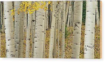 Wood Print featuring the photograph Into The Forest by Gary Lengyel