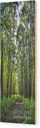 Wood Print featuring the photograph Into The Forest I Go by DJ Florek