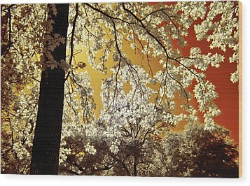 Wood Print featuring the photograph Into The Golden Sun by Linda Unger