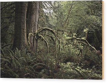 Into The Mystic Wood Print