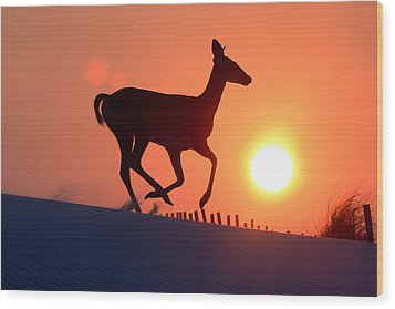 Into The Sunset Wood Print by Scott Mahon