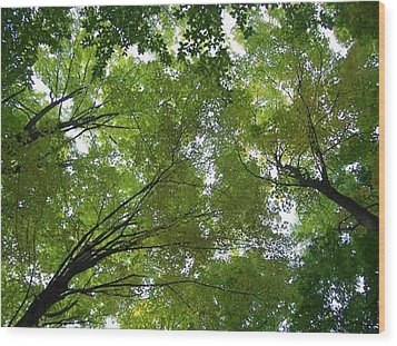 Wood Print featuring the photograph Into The Trees by Michael  TMAD Finney