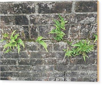 Intrepid Ferns Wood Print