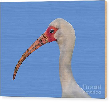 Wood Print featuring the photograph Intriguing Ibis .png by Al Powell Photography USA