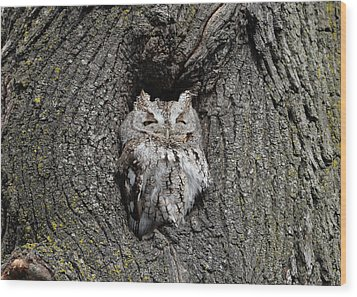 Wood Print featuring the photograph Invincible Screech Owl by Stephen Flint