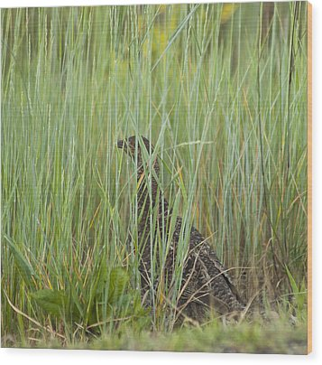 Wood Print featuring the photograph Invisible Female Spruce Grouse by Daniel Hebard