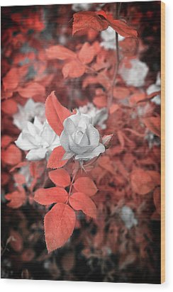Ir Rose  Wood Print