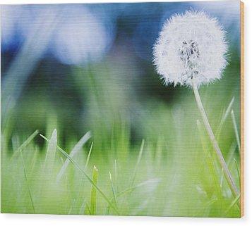 Ireland, County Westmeath, Dandelion In Meadow Wood Print by Jamie Grill