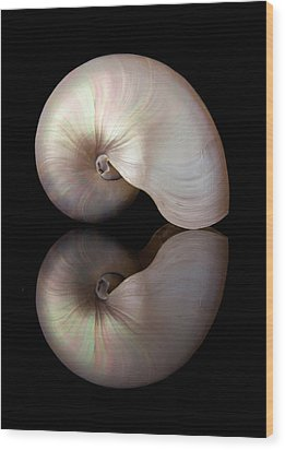 Wood Print featuring the photograph Iridescent Nautilus Shell by Jim Hughes