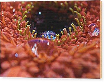 Iridescent Water Drops Wood Print by Lisa Knechtel