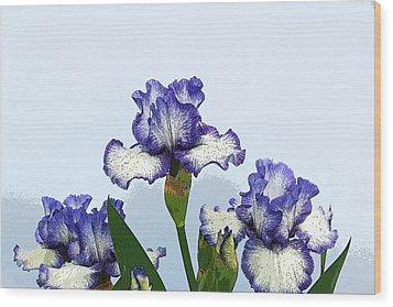 Iris 15 Wood Print by Allen Beatty