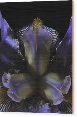 Iris Aglow Wood Print