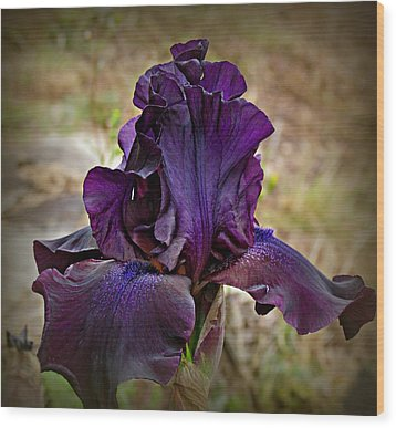 Iris Beauty Wood Print