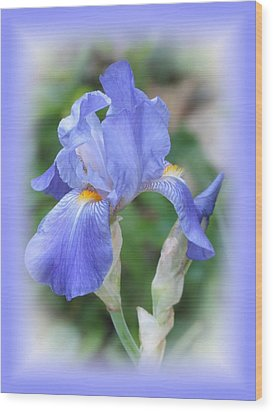 Iris Beauty Wood Print by MTBobbins Photography