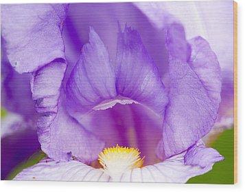 Iris Blossom Wood Print by Dina Calvarese