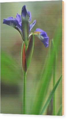 Iris Caesar's Brother Wood Print by Rebecca Sherman