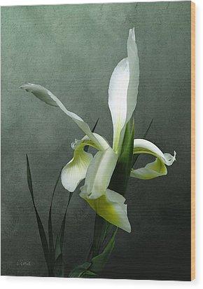 Iris Celebration Wood Print by I\'ina Van Lawick