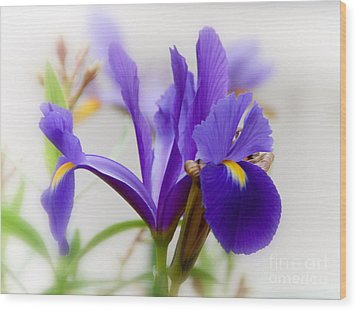 Wood Print featuring the photograph Spring Iris by Elaine Manley