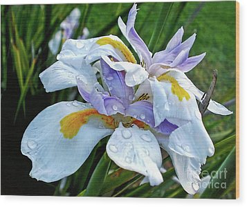 Iris Enjoying The Sunshine Wood Print by Kaye Menner